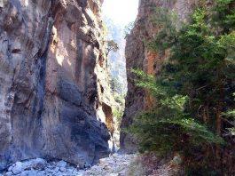 Εθνικός Δρυμός Σαμαριάς