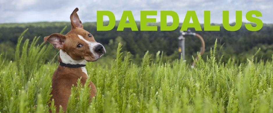 Daedalus,dog