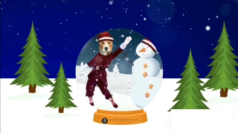 Hoolie Pet Insurance