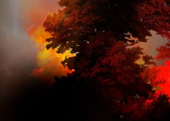 burning-forest-global-warming-wildfire-photography
